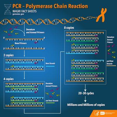 PCR na detecção rápida da febre amarela