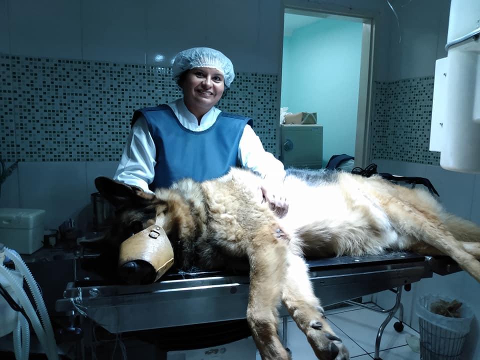 Coordenadora do IPESSP investiga ocorrência da Leishmaniose em cães por meio de diagnóstico molecular