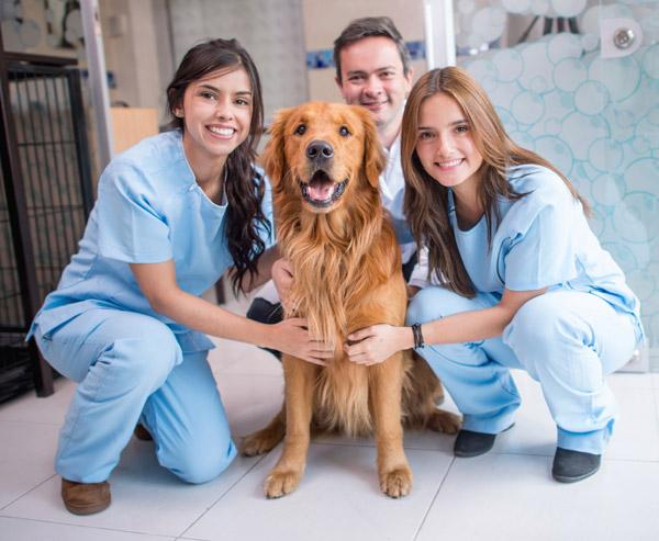 Auxiliar de Médico Veterinário
